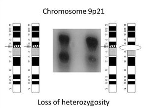 Loss Of Heterozygosity